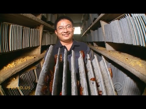 Inside China's cockroach farming boom
