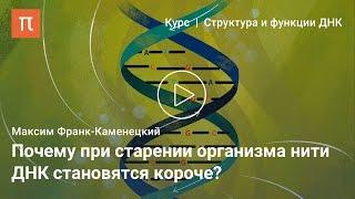 Репликация ДНК — Максим Франк-Каменецкий