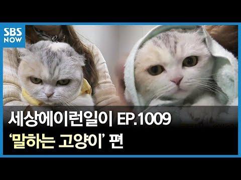 SBS [순간포착 세상에 이런일이] -말하는 고양이/ 'What on Earth!' Ep.1009 review