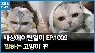 SBS [순간포착 세상에 이런일이] -말하는 고양이/
