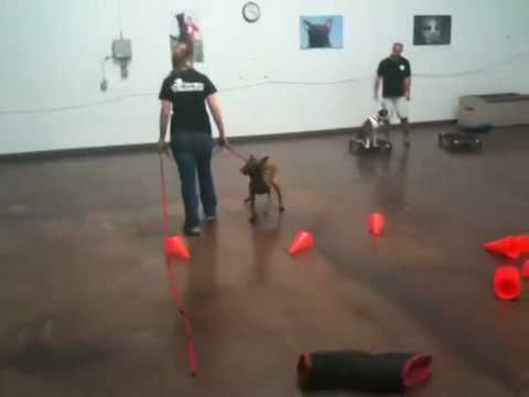 how to get a dog to walk backwards