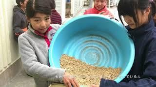 来週水曜日の収穫祭にむけて、両クラス共もみすりをして、玄米を作りま...