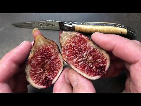 french fig farm: Napolitaine