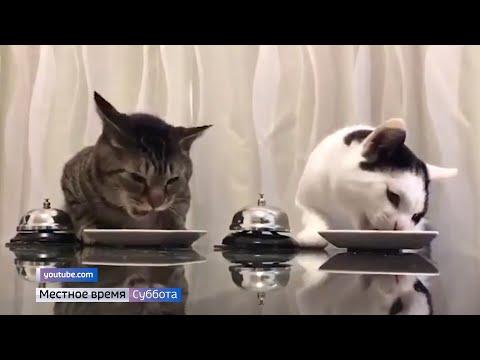 Как часто можно менять сухой корм для кошек