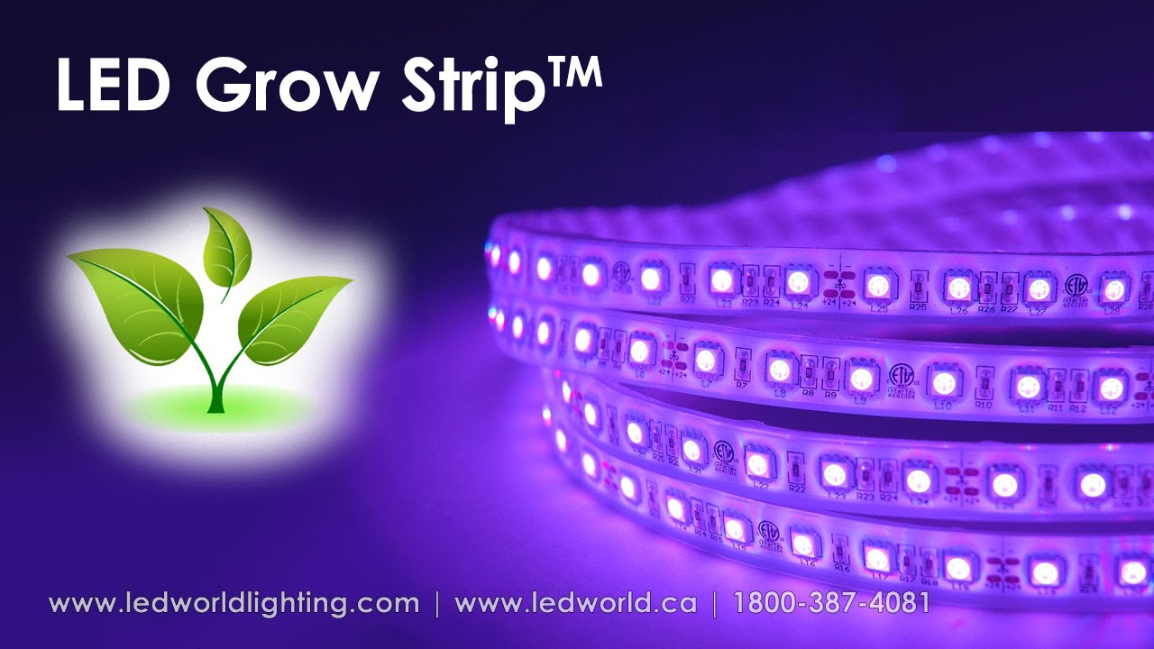 Led grow strip for plant production youtube mozeypictures Images