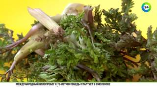 Зеленая кухня Армении