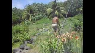 Life on Alamagan Island, Commonwealth of the Northern Mariana Islands