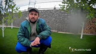 видео Полив газона