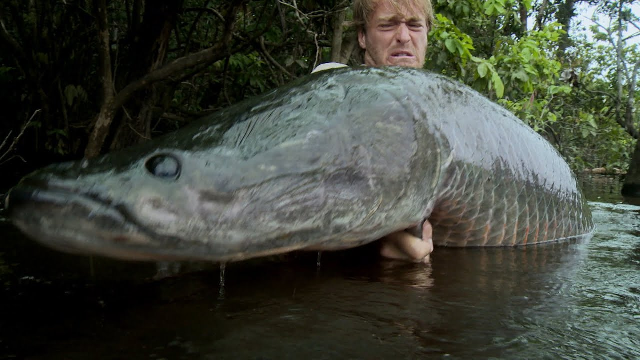 Hunting for a giant arapaima jakub vagner big fish man for Pictures of big fish