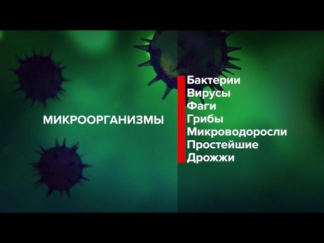 08.04.20. Жизнь здоровых людей. Вирусы