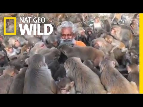 What Not To Do When Interacting With Monkeys   Nat Geo Wild