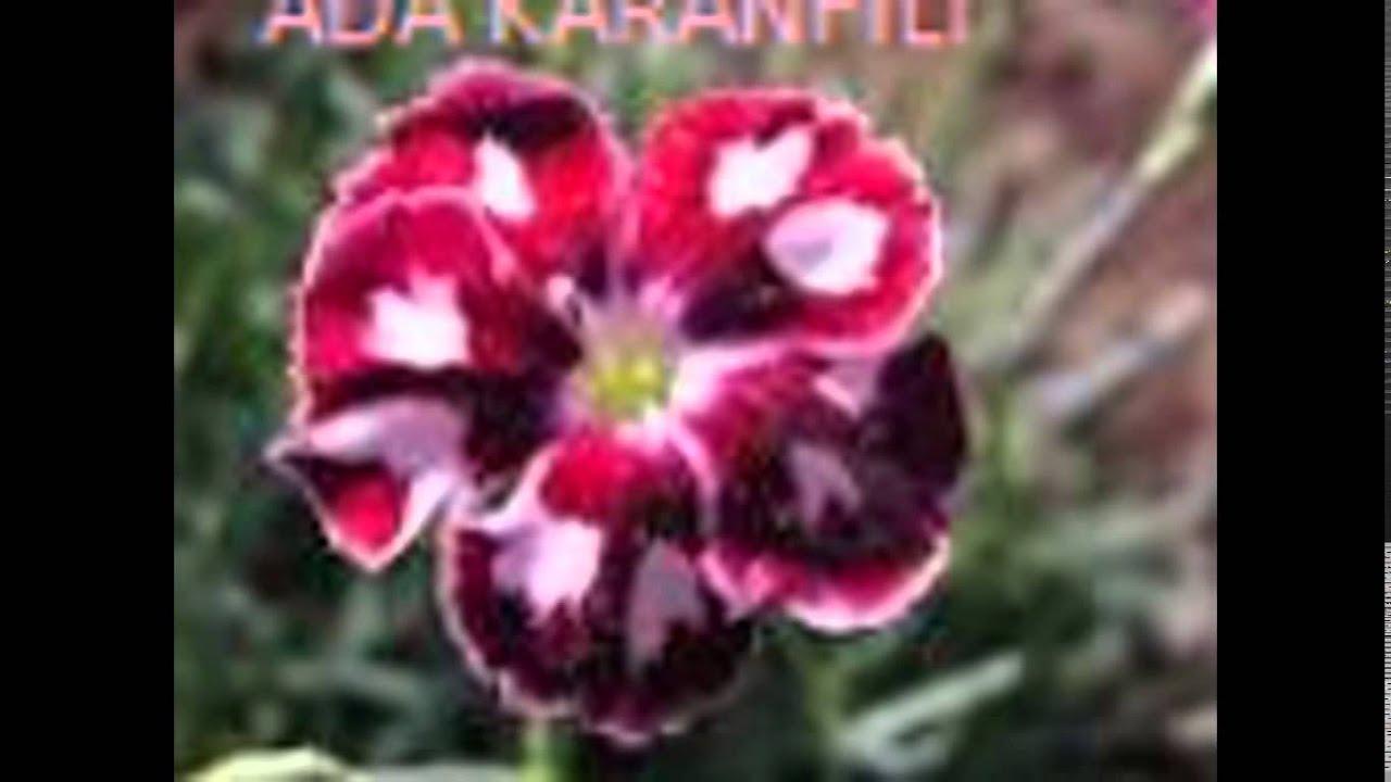 çiçekler Ve Adları Youtube