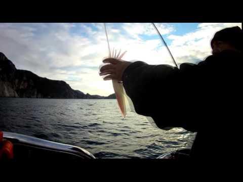 FURUNO Fishfinder/GPS  GP1870F Squid Fishing