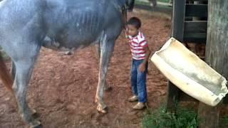 Olhe o que esse cavalo fez, Nioaque-MS thumbnail