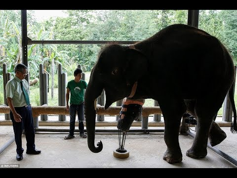 World's MOST Beloved Elephants