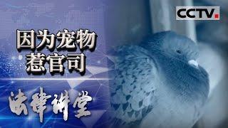 《法律讲堂(生活版)》 20210109 因为鸽子惹官司| CCTV社会与法 - YouTube