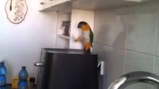Танцующие попугаи(, 2016-04-20T09:27:20.000Z)