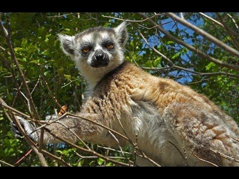 Amazing Colours of Madagascar - Travel Snapshots 4K (Ultra HD)