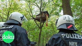 Bäume oder Braunkohle? Der Kampf um den Hambacher Forst | WDR Doku
