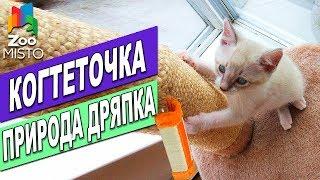 Когтеточка Природа Дряпка   Обзор когтеточки для кошек   Scratching post for cats Priroda review