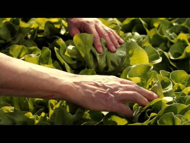 Einzigartiges Gemüse
