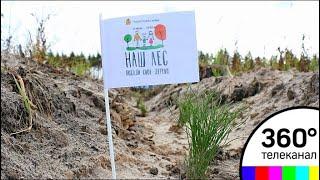 Скачать Наш лес Более 1 6 млн деревьев высадят в Подмосковье