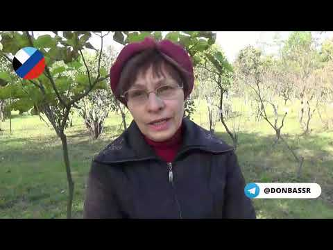В Донецк пришла сиреневая аномалия