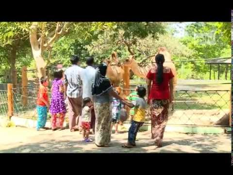 mitv - Yangon Zoo & Garden: Families And Friends Relax During Holidays
