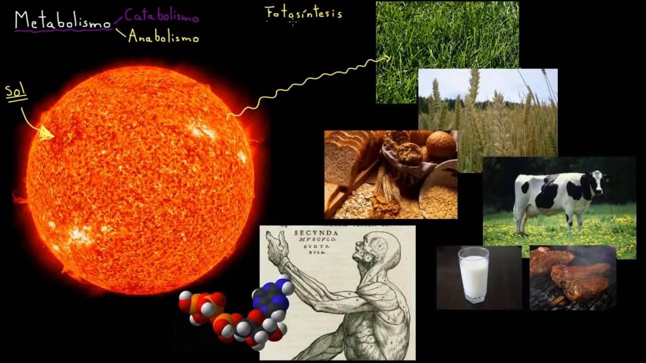 Introducción al metabolismo: anabolismo y catabolismo..