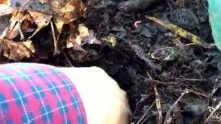 Hot Composting With Worms In The Winter