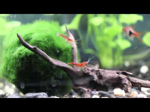 6 months update - (Aquatlantis Advance Led 60+ Community Fish Tank)