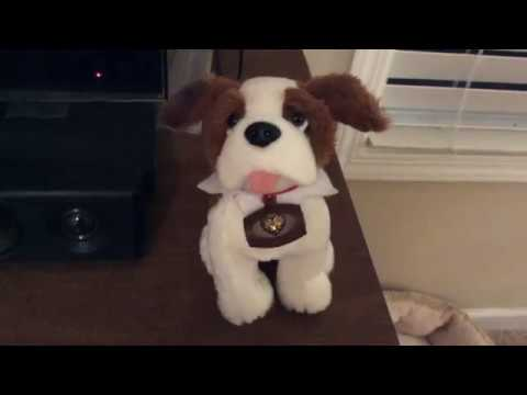 Name Announcment Elf On The Shelf Dog Youtube