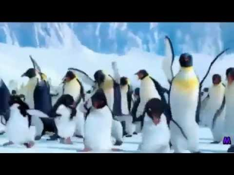 The Penguin Song Happy Birthday - YouTube