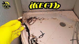 ЭТО ещё что за ОНО УЖАС -  соседей залило - вызов сантехника - ремонт и чистка душевой как и зачем
