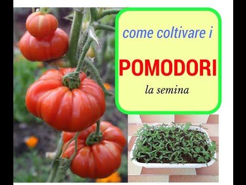 Come piantare i pomodori la semina in semenzaio youtube for Piantare pomodori