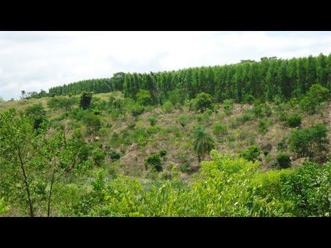 Restauração Florestal em Área de Preservação Permanente - Projeto