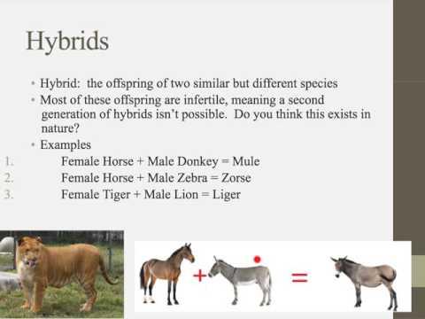 IB Biology 4.1 Notes