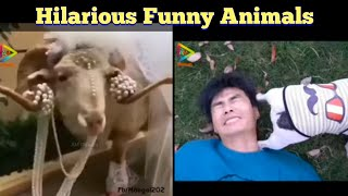 Hilarious Funny Animals | Funniest Dogs And Cats Try Not To Laugh Challenge Best Funny Animal Videos