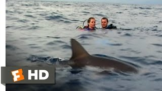 Open Water (4/11) Movie CLIP - Was That a Shark? (2003) HD
