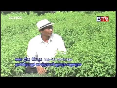 BTV  Agriculture News   ដំណាំម្រះព្រៅ   September 19, 2015