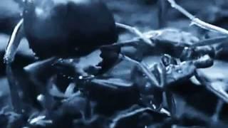 Body Harvest - Massenvernichtung (PRYPJAT - Remix)
