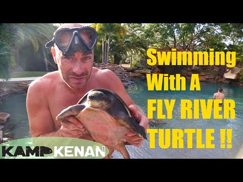 Swimming with a Fly River Turtle!