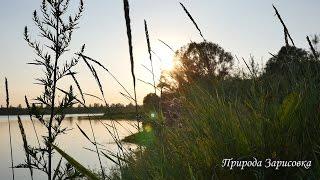 Природа. Музыка. Пение птиц. Релакс. Медитация. Звуки природы. Река. Слушать. Эмбиент