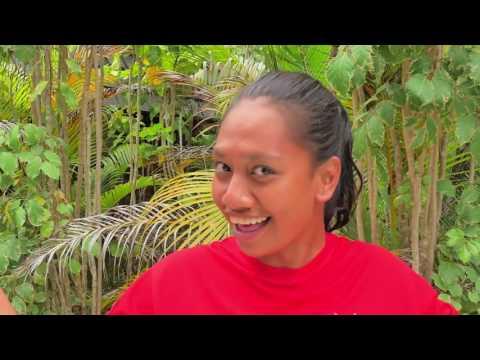 Plantation Island Resort - Fiji - Island Escapes - Affordable Family Holiday to Fiji