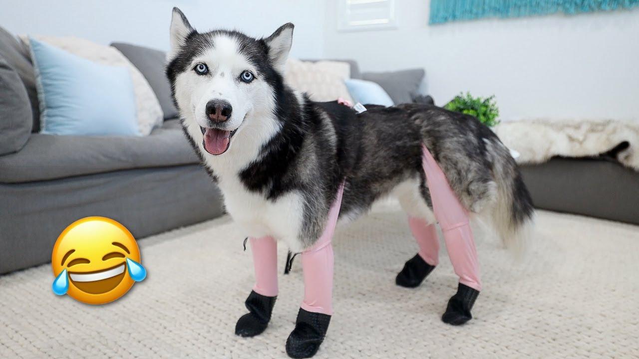 Testing TikTok Dog Products With My Huskies!