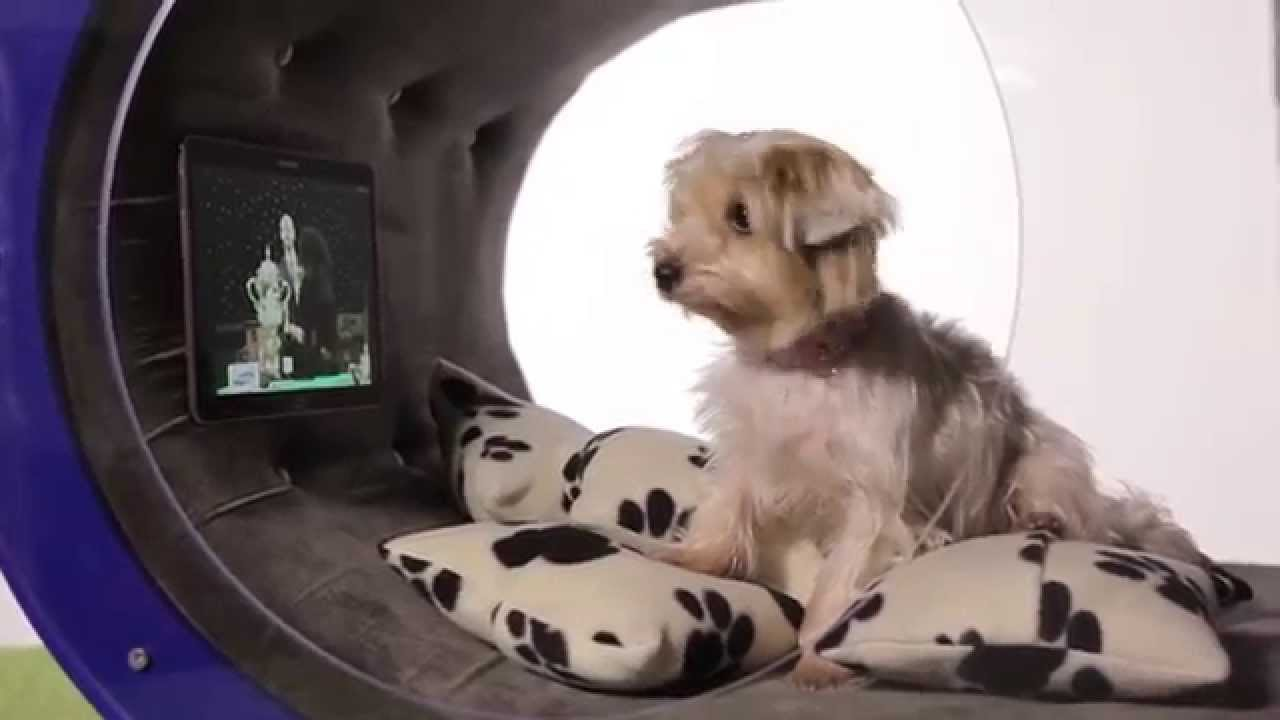 Samsung   Crufts 2015: Samsung Dream Doghouse