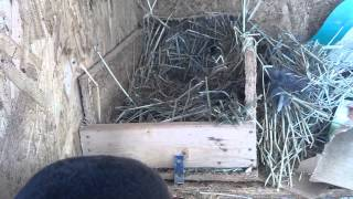 How to build a rabbit nest box