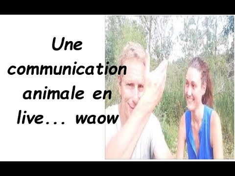 Une Communication Animale En Live... Impressionnant