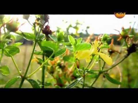 пчелиное маточное молочко польза и вред как принимать