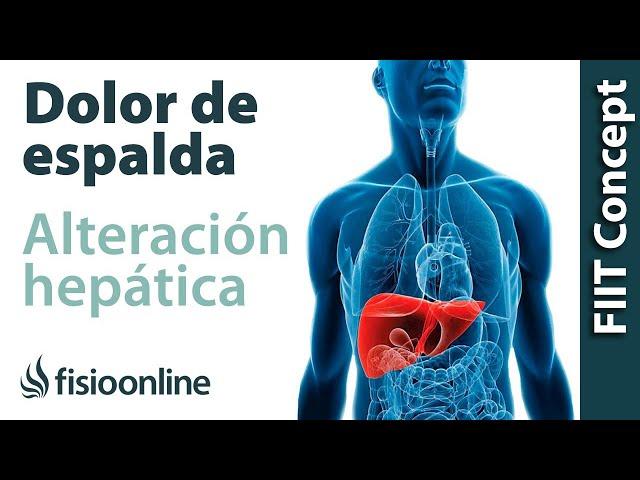 Cómo repercute la disfunción de hígado sobre el sistema Músculo ...